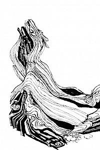 These1-3 Schuelerarbeit - Studie Verwittertes Holz 1994